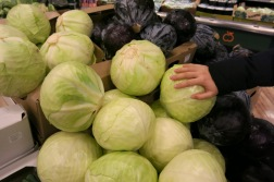 enormous cabbage