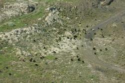 Lots of Llama